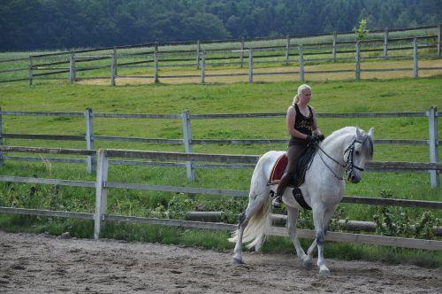 horse stallion mold