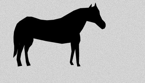 horse equine equestrian