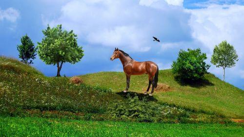 horse bird arara