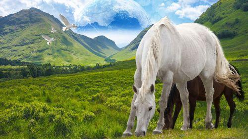 horse stallion freedom