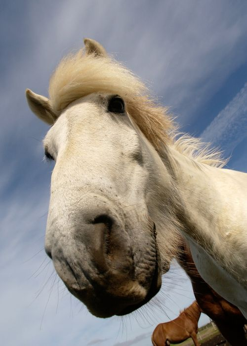 horse equine wild