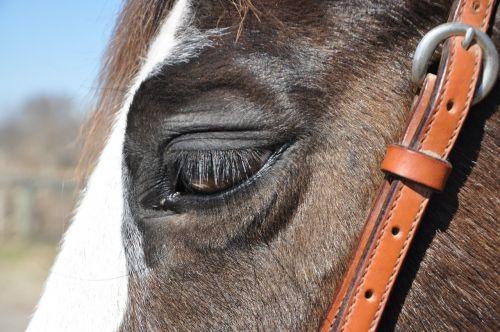 horse bridle animal
