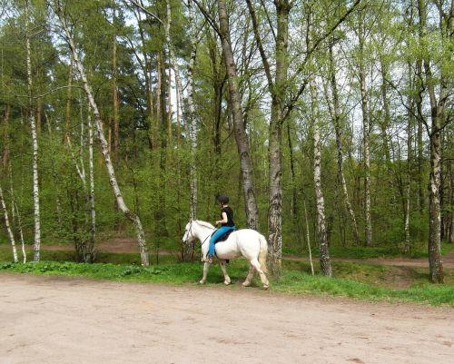 horse white ride