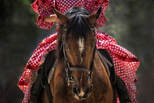 horse horse show horse head