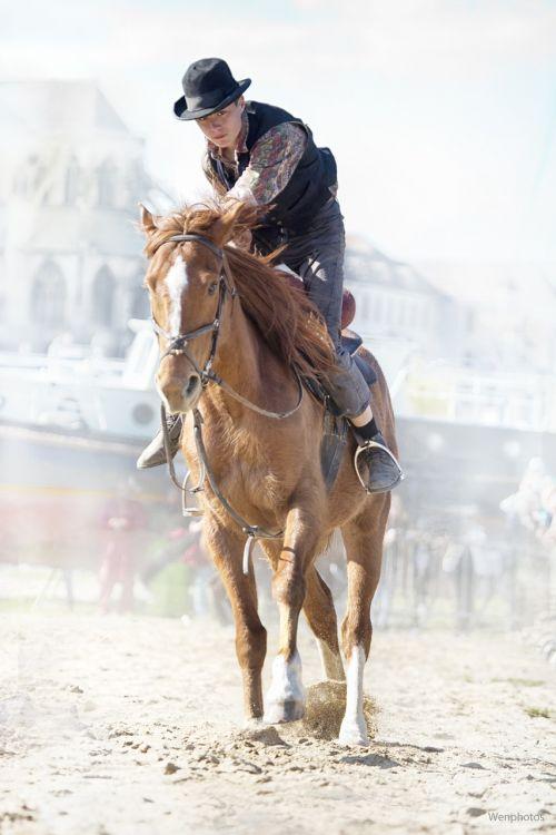 horse gallop horse show
