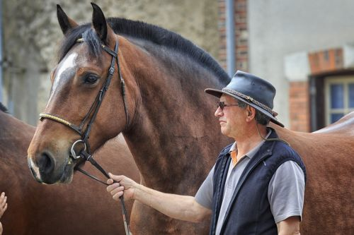 horse a workhorse ardennes
