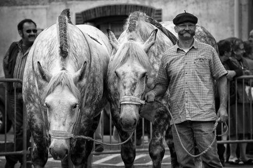 horse horses horse treats