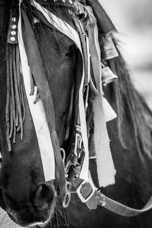 horse black and white traditions