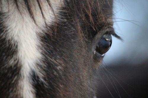 horse eye horse eye