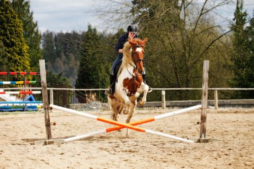 horse jump obstacle