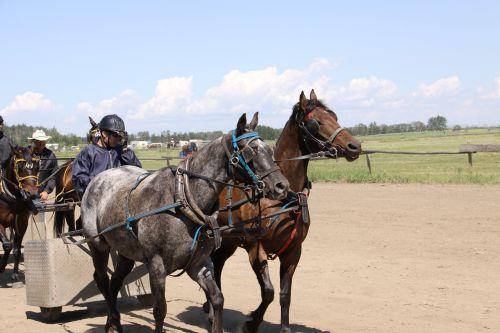 horse chariot racing