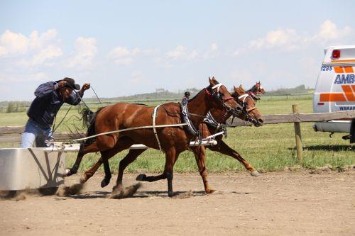 horse chariot batoche