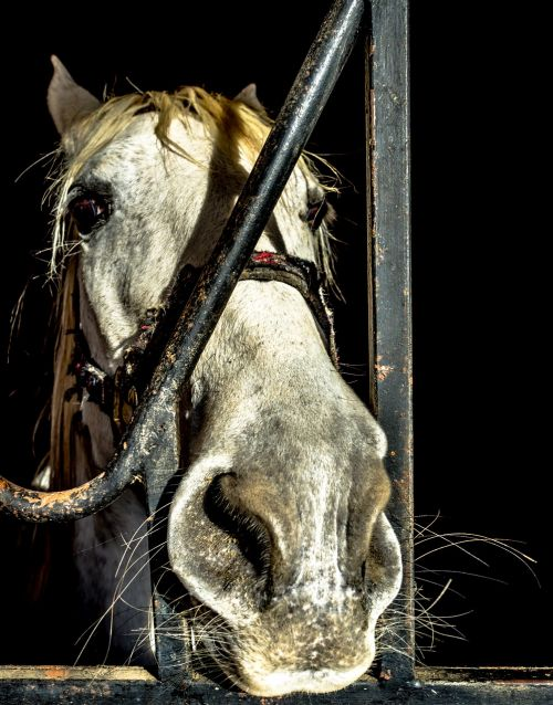 horse block animal