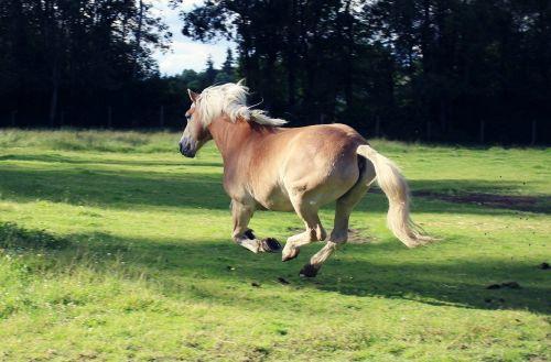 horse running freedom