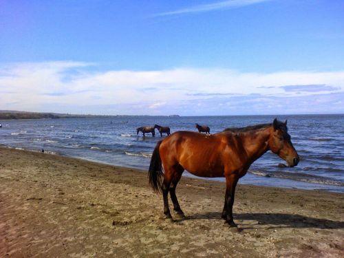 horse sea ocean