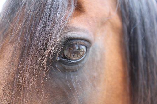 horse dream equine