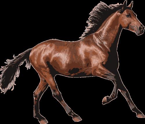horse race horse animal