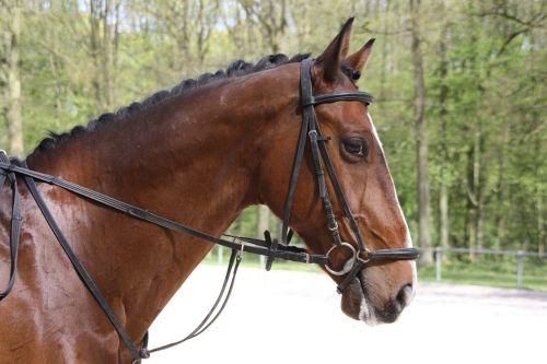 horse ride equestrian