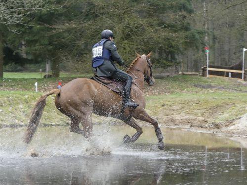 horse rider fox