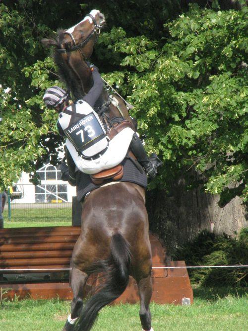 horse riding equine