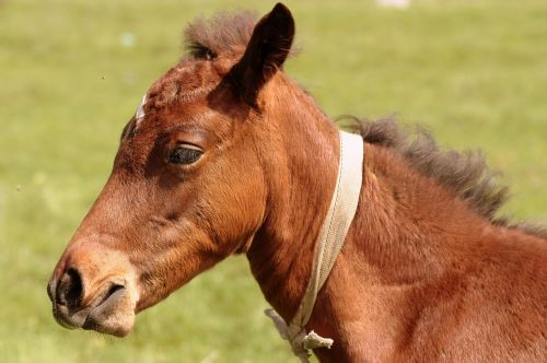 horse brown equine