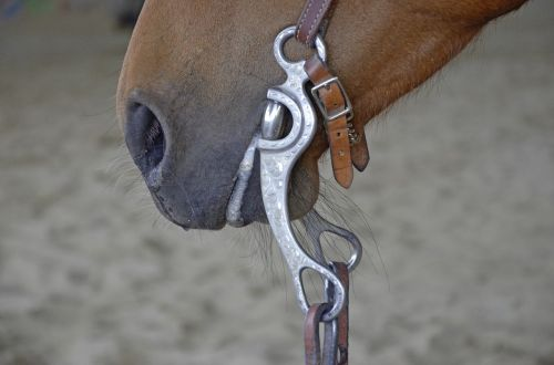 horse bridle foot