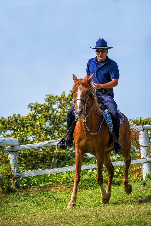 horse mount horse riding