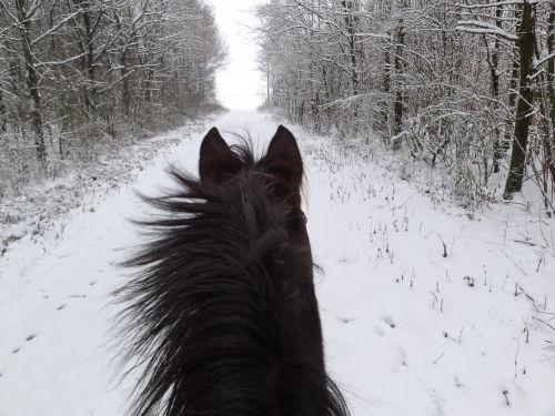 arklys,žiema,arklio galva,sniegas,rap