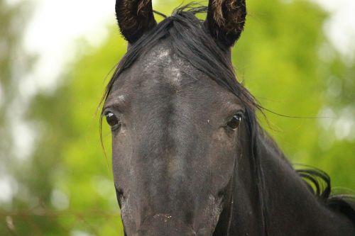 horse mare horses eye