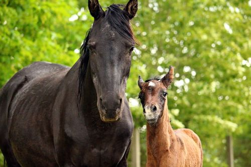 horse foal mare