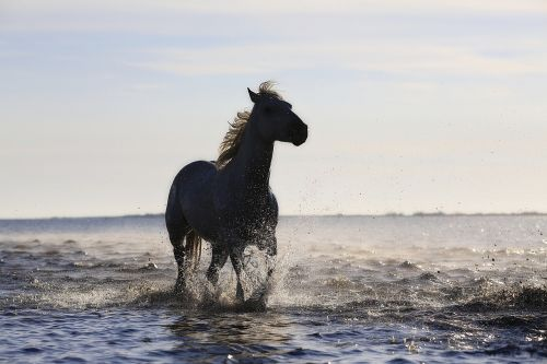 horse gallop horses