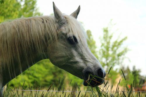 horse mold nostrils