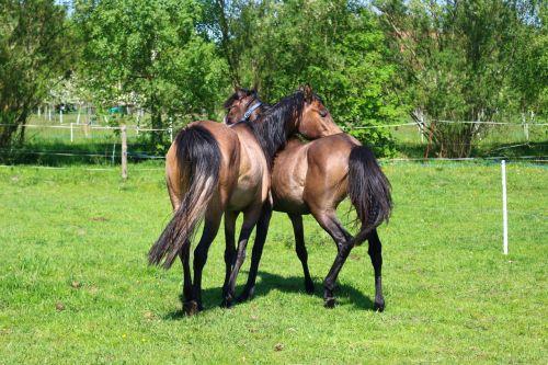 horse brown mold thoroughbred arabian