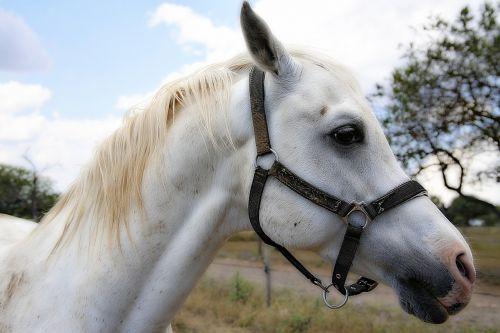 horse mane horses