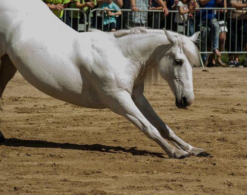 horse horseback riding dressage
