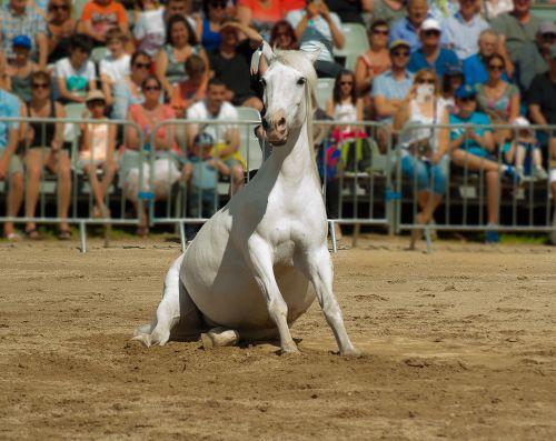 horse horse show dressage