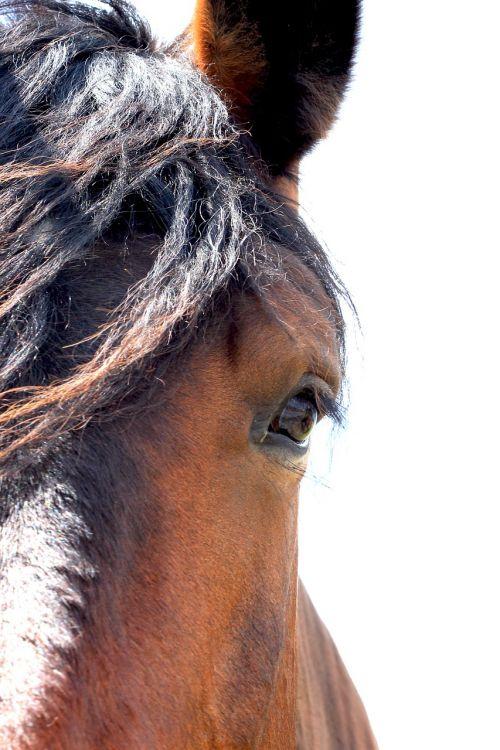 horse equestrian animals