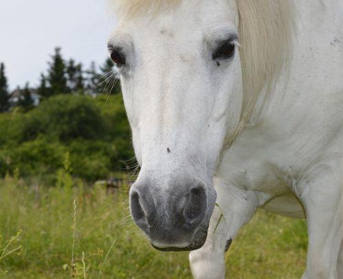 horse white white horse
