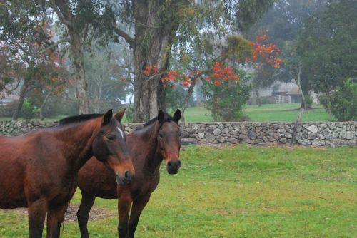 horse field rural