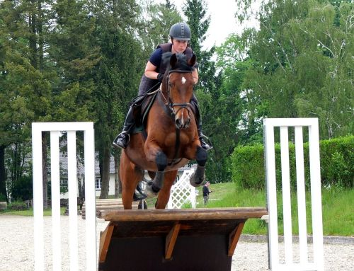 horse military eventing