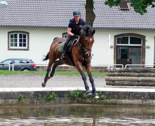 horse versatility military-horse riding