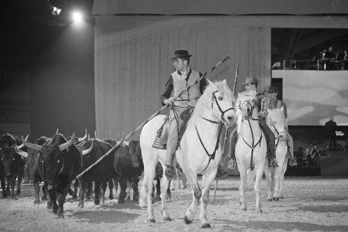 horse horsehair equine