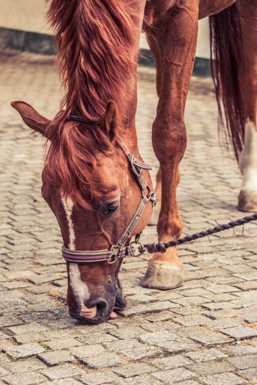 horse stone lick halter