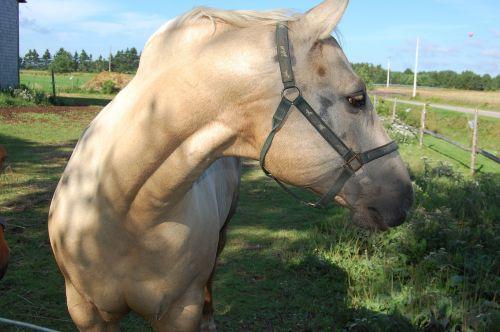 horse prince edward island canada