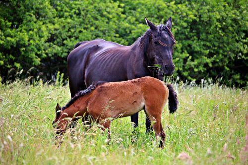 horse foal rap