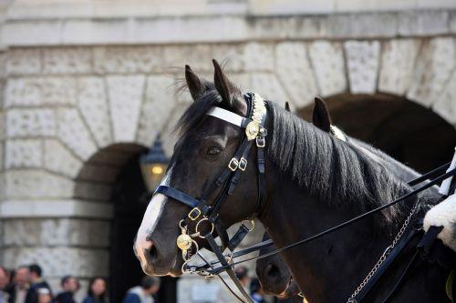 horse portrait household cavalry
