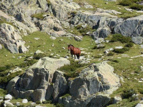 arklys,akmenys,aukštas kalnas,Pirėnai,tavascan uostas,domenas,gamta