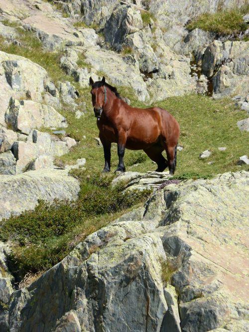 arklys,akmenys,Pirėnai,laukinė gamta,tavascan uostas,domenas,aukštas kalnas