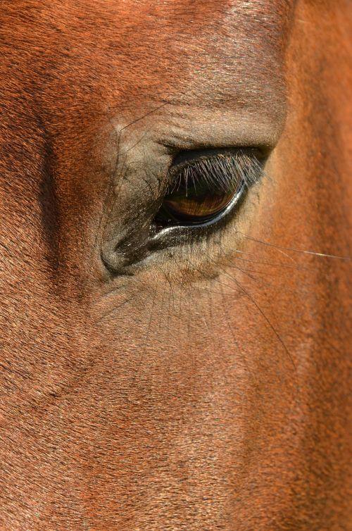 horse eye paardenoog