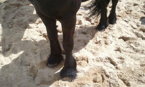 horse hoof horses